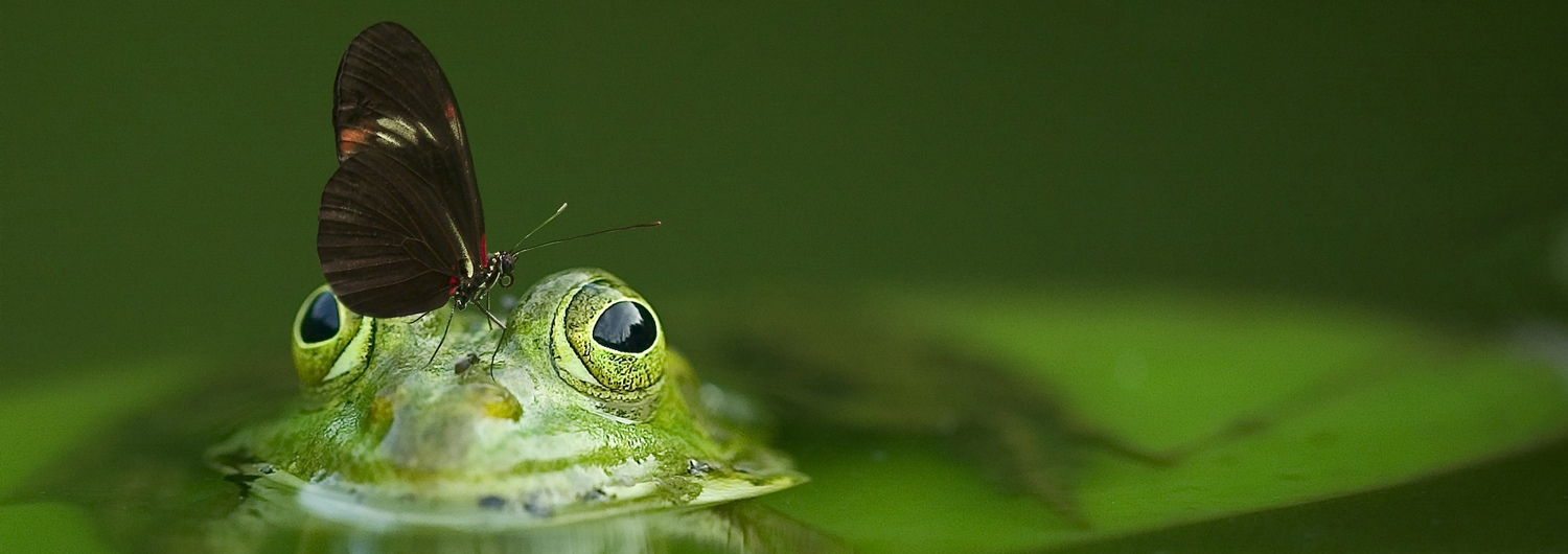 Wildlife and my pond fish pond products for Fish pond chemicals